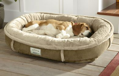 Reasons Why to Invest in The Right Dog Bed